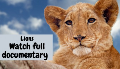 National Geographic Documentary - King Of Africa - Wildlife Animals