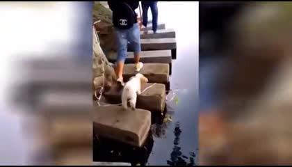 Cute & Funny Animals Videos