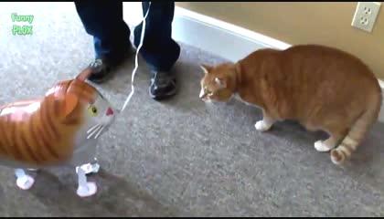 Funny Cats vs Balloons