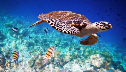 SEA TURTLES  Animals For Kids