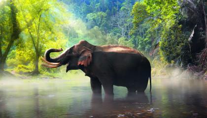 ELEPHANT  Animals For Kids