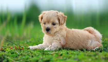 TOP 10 dog barking videos