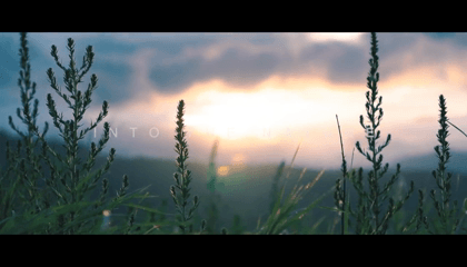 Into The Nature | Cinematic Travel Video