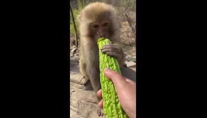Cute monkey's