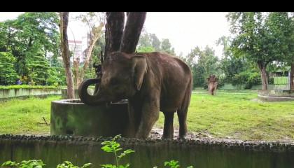 Elephant enjoying his day
