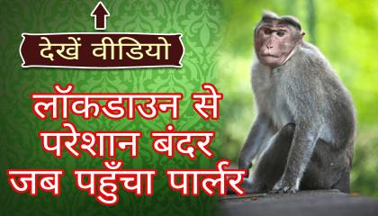 लॉकडाउन से परेशान बंदर जब पहुँचा पार्लर