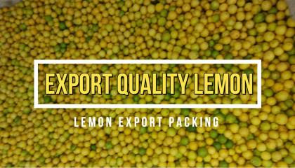lemon export packing | export quality lemon | lemon export | lemons price