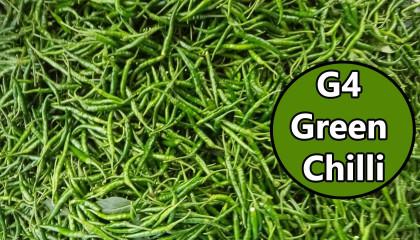 g4 green chilli exports | g4 green chilli Price | G4 Chilli price