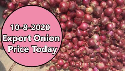 onion price today | Export Onion Price | onion export price in india