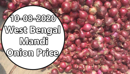 west bengal onion price | onion price today | onion export price in india