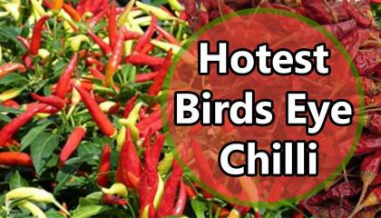 birds eye chilli | dhani mirchi | longi mirch | bird eye chilli | chilli price