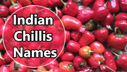 indian chillis names | types of chillies in india | chilli variety list