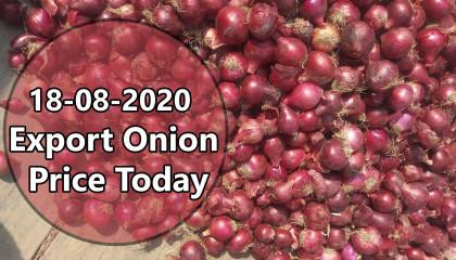 onion export price in india | onion price today | export onion Price