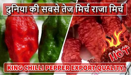 naga morich   king chilli   raja mircha   hot chilli pepper   bhut jolokia india   ghost pepper