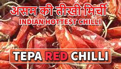 tepa red chilli   tepa chilli   bullet chilli   assam red chilli   bullet chilli heat