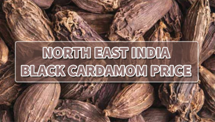 black cardamom price today   arunachal black cardamom price   nagaland large cardamom