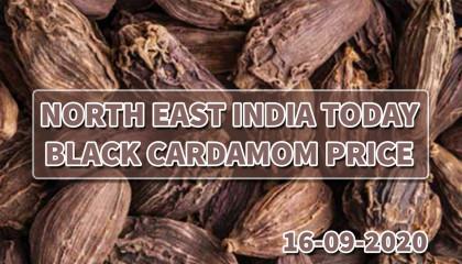 badi elaichi price today   badi elaichi price india   बड़ी इलायची के बाजार भाव