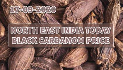 big cardamom price   large cardamom price   black cardamom price   बडी इलायची के बाजार भाव   india