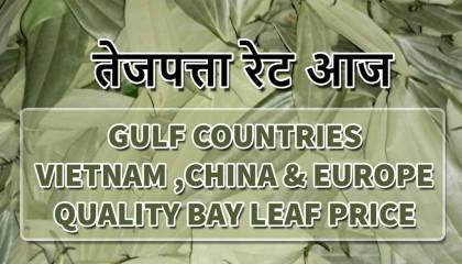तेजपत्ता रेट   bay leaves price   bay leaves uae   bay leaf price europe   tej patta