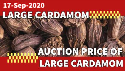 arge cardamom auction rate | black cardamom price | black cardamom price in siliguri