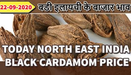 large cardamom price | black cardamom price | डोडा इलायची रेट | big cardamom price