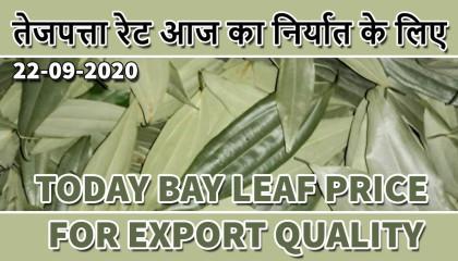 tej patta price in india | bay leaves price | bay leaves uae | bay leaf price europe