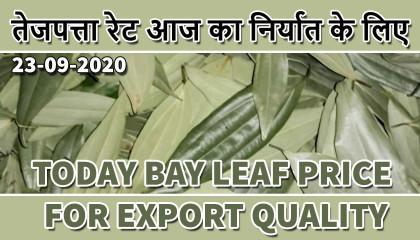 tej patta price | bay leaves price | bay leaves uae | bay leaf price