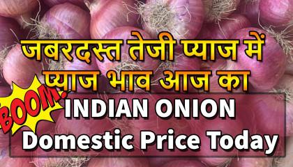 कांदा बाजार भाव तेज | today onion price | प्याज का भाव | प्याज की दाम