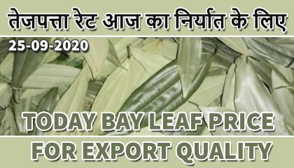 tej patta price in india | tej patta price | bay leaves price | bay leaves siliguri