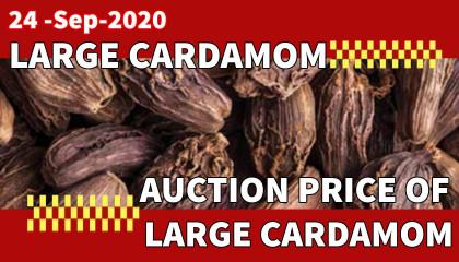 large cardamom auction rate | black cardamom auction price | large cardamom price in siliguri