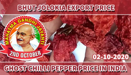 bhut jolokia price per kg | ghost pepper price in india | bhut jolokia suppliers in india