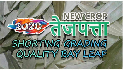 2020 new crop | tej patta wholesalers in siliguri | tej patta wholesale price
