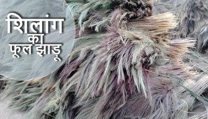 broom grass price in shillong broom raw material price phool jhadu raw materials price