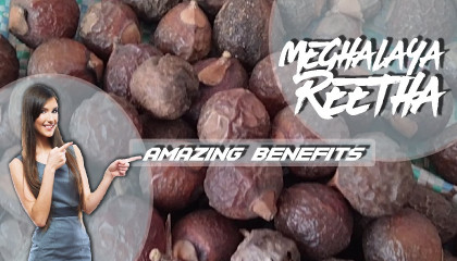 reetha price soap nuts price reetha suppliers  soap nuts bulk suppliers reetha benefits