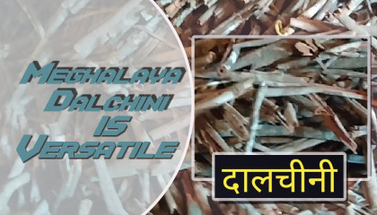 Dalchini in Shillong Meghalaya Cinnamon Dalchini price Meghalaya Cinnamon price