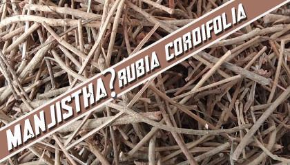 rubia cordifolia price manjistha price manjistha in meghalaya  manjistha in shillong