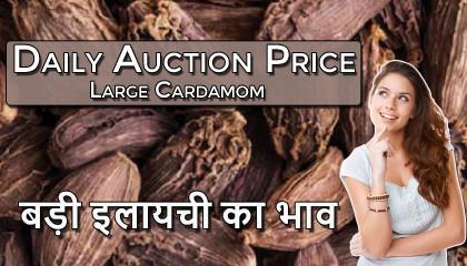 Daily Auction Price of Large Cardamom  siliguri large cardamom price  cardamom price