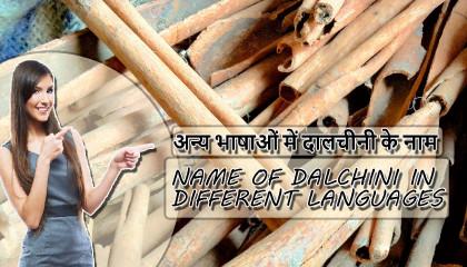 दालचीनी के नाम Name of Dalchini  Dalchini price Meghalaya Cinnamon