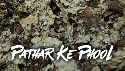 Stone Flower price  Pathar Ke Phool Dagad Phool  Kalpasi  Black Stone Flower  lichen