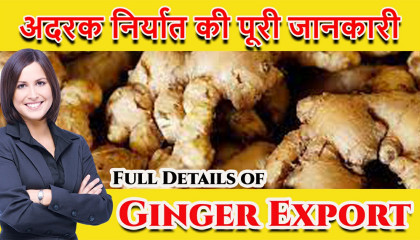Ginger export business in India How to Export Ginger हिंदी में