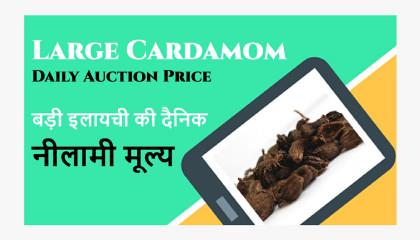 Daily Auction Price of Large Cardamom siliguri large cardamom price