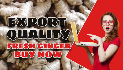 export quality ginger meghalaya export ginger price