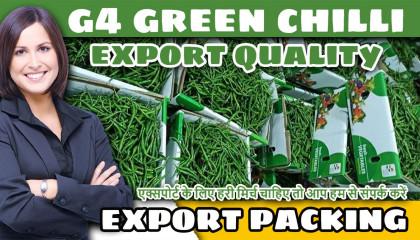 g4 green chilli export quality fresh green chilli g4 green chilli export