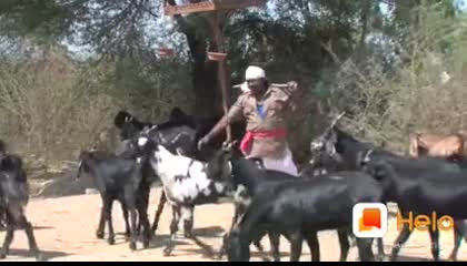 Kali bakri safed bakri || Funny video
