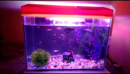 Mah fishes are playing in tank ?