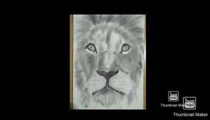 lion drawing realistic