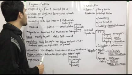 Kingdom-Protista-1(General Features) chapter biological classification