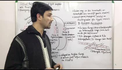 Fungi(Part:3)-Life Cycle Patterns (Class 11th & NEET)