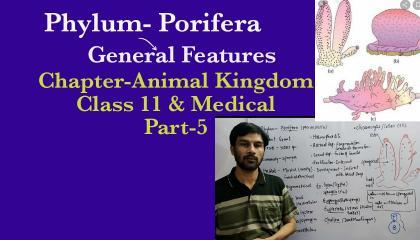 Animal Kingdom(Part-5): Phylum Porifera