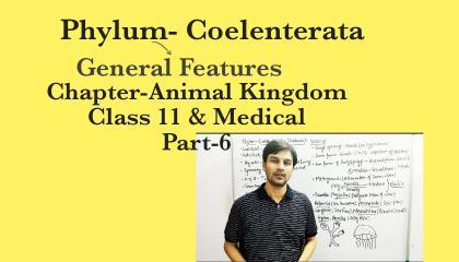 Animal Kingdom Part-6(Phylum Coelenterata)